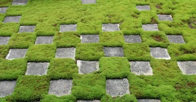 Идея для «зеленых» фасадов позволит сократить энергопотребление  зданий